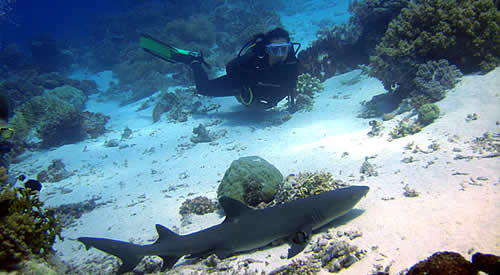 scuba diving in moalboal